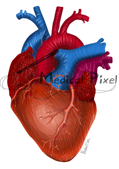 Kalp (Heart)